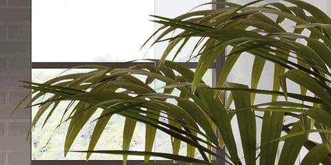 Interior design, Wall, Transparent material, Tile, Bathroom,