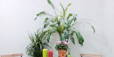 Flowerpot, Plant, Furniture, Vase, Interior design, Houseplant, Artifact, Flower Arranging, Peach, Outdoor furniture,