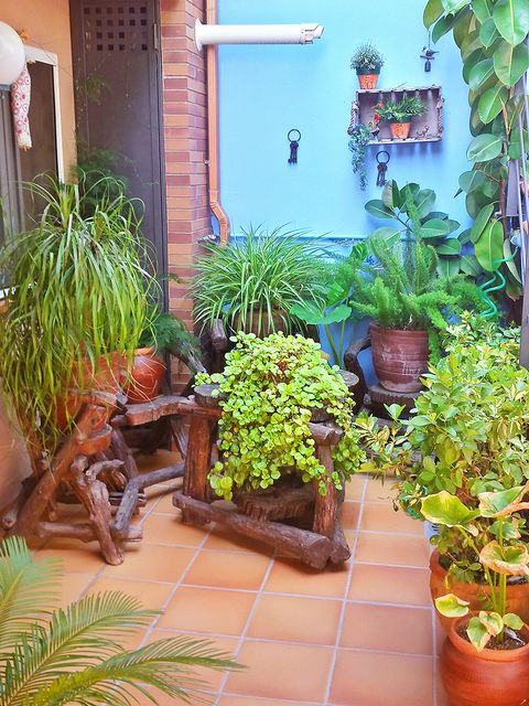 Flowerpot, Plant, Interior design, Houseplant, Garden, Herb, Door, Annual plant, Backyard, Yard,