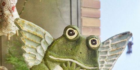Organism, Adaptation, Amphibian, Terrestrial animal, Toad, True frog, Animal figure, Frog, Wing, Symbol,