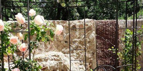 Table, Petal, Outdoor table, Garden, Rose order, Shrub, Rose family, Flowering plant, Garden roses, Coffee table,