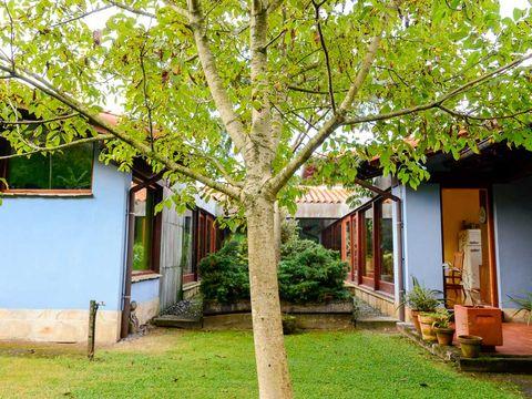 Branch, Window, Neighbourhood, Property, House, Residential area, Leaf, Building, Home, Flowerpot,
