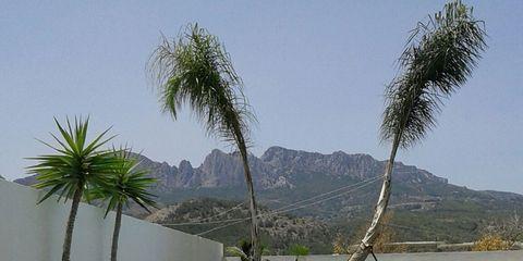 Swimming pool, Property, Real estate, Arecales, Aqua, Azure, Resort, Shade, Composite material, Tile,
