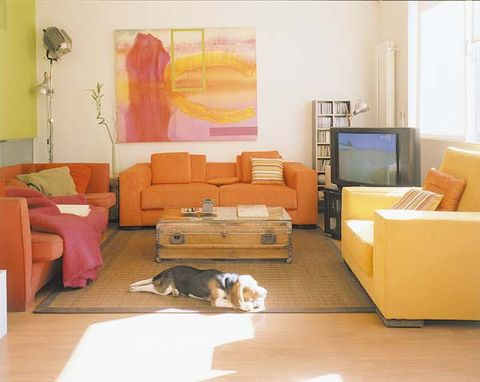 Room, Interior design, Wood, Floor, Living room, Flooring, Home, Couch, Wall, Dog breed,
