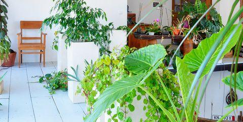 Una casa decorada con muebles antiguos y (muchas) plantas