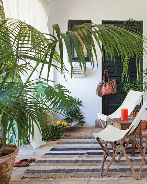 Flowerpot, Terrestrial plant, Houseplant, Arecales, Interior design, Outdoor furniture, Tropics, Armrest, Palm tree,