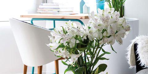 Room, Bouquet, Petal, Flower, Interior design, Cut flowers, Artifact, Interior design, Centrepiece, Flower Arranging,