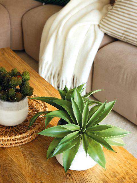 Houseplant, Green, Leaf, Plant, Room, Floor, Flower, Laminate flooring, Table, Flooring,