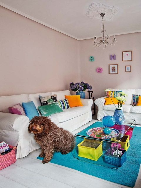 Blue, Room, Dog, Interior design, Carnivore, Mammal, Dog breed, Teal, Turquoise, Sporting Group,