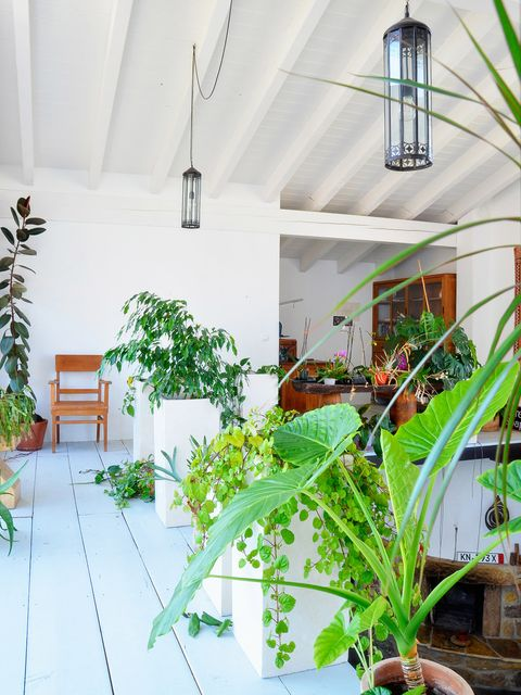 Green, Houseplant, Property, Room, Plant, Botany, House, Real estate, Home, Building,