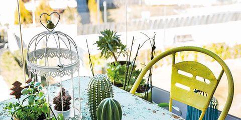 Furniture, Flowerpot, Outdoor furniture, Houseplant, Design, Armrest, Outdoor table, Herb,