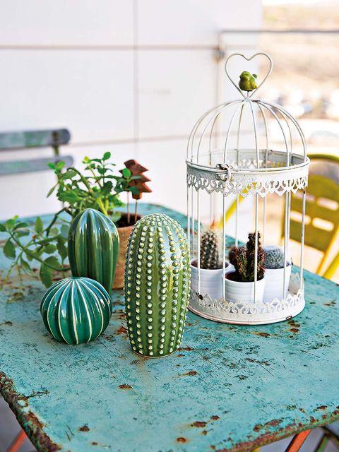 Cactus, Turquoise, Table, Cage, Plant, Room, Houseplant, Shelf, Lantern, Linens,