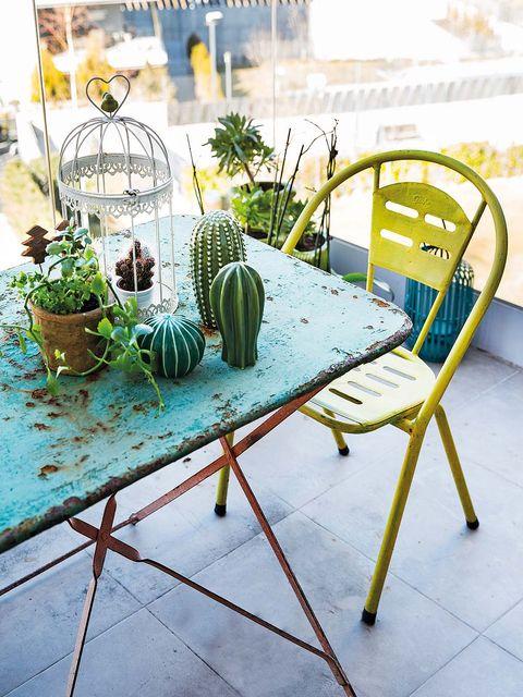 Flowerpot, Houseplant, Design, Outdoor furniture, Herb, Cactus, Armrest, San Pedro cactus, Floral design,