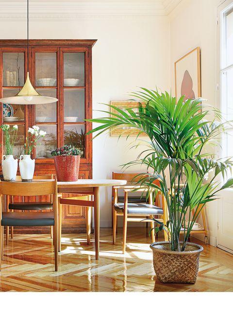 Wood, Flowerpot, Interior design, Floor, Flooring, Hardwood, Chair, Interior design, Houseplant, Kitchen & dining room table,