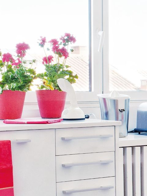 Flowerpot, Petal, Flower, Drawer, Pink, Room, Cabinetry, Interior design, Magenta, Chest of drawers,