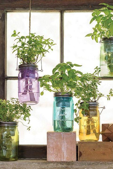Flowerpot, Mason jar, Houseplant, Green, Plant, Herb, Window, Glass, Flower, Interior design,