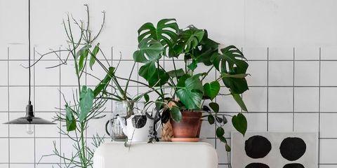 Flowerpot, Houseplant, Room, Plant, Wall, Interior design, Material property, Tree, Vase, Herb,