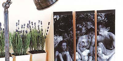 Flowerpot, Publication, Book cover, Book, Houseplant, Painting, Fiction,