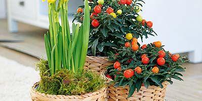Flower, Basket, Ingredient, Wicker, Produce, Storage basket, Flowering plant, Fruit, Home accessories, Natural foods,