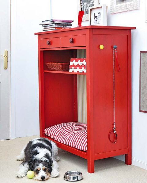 Floor, Carnivore, Red, Dog breed, Dog, Flooring, Fixture, Door, Picture frame, Canidae,
