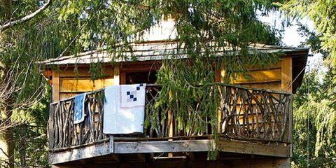 Shrub, Tree house, Wire fencing,