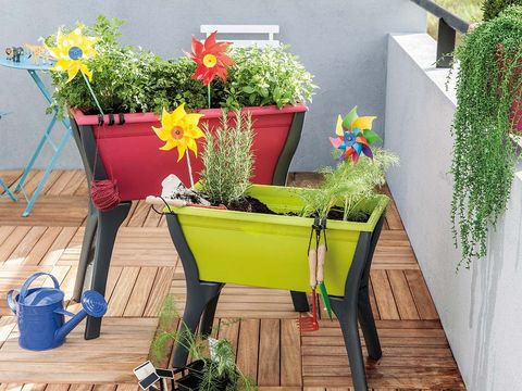 Plant, Flowerpot, Flower, Petal, Shrub, Houseplant, Interior design, Watering can, Floristry, Annual plant,