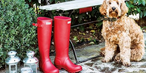 Dog, Canidae, Red, Footwear, Boot, Dog breed, Carnivore, Leg, Sporting Group, Companion dog,