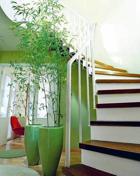Green, Yellow, Interior design, Flowerpot, Teal, Interior design, Turquoise, Paint, Pottery, Stairs,