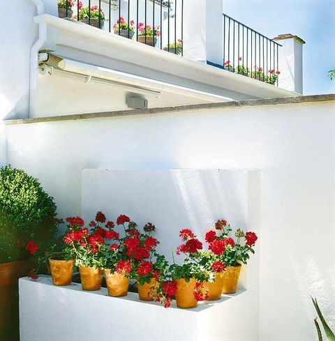 Plant, Flowerpot, Wall, Interior design, Paint, Houseplant, Shrub, Floristry, Flower Arranging, Floral design,