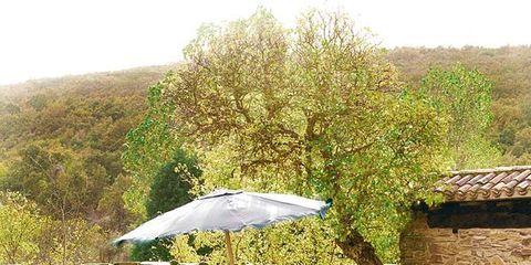 Umbrella, Outdoor table, Outdoor furniture, Bird, Stone wall, Lawn, Groundcover, Garden, Yard, Feather,