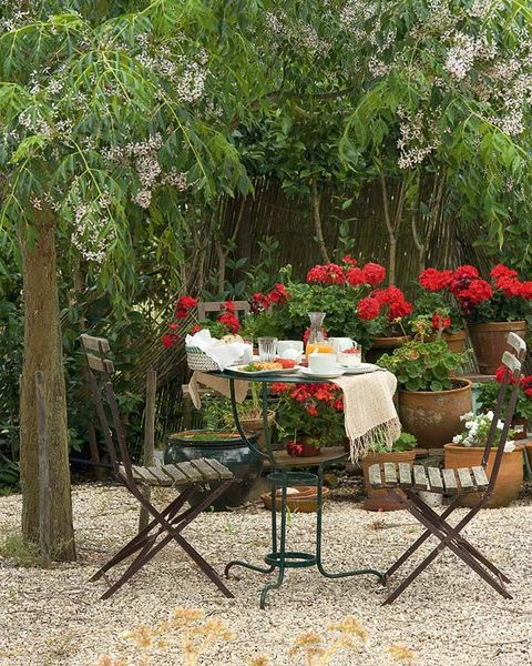 Plant, Petal, Flower, Table, Outdoor table, Flowerpot, Shrub, Outdoor furniture, Garden, Trunk,