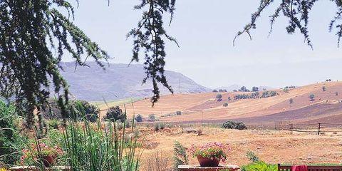 Grass, Plant, Shrub, Garden, Landscape, Plant community, Hill, Groundcover, Grass family, Landscaping,