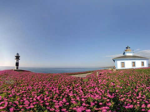 Sky, Flower, Plant, Pink, Spring, Wildflower, Landscape, Lighthouse, Magenta, Tower,
