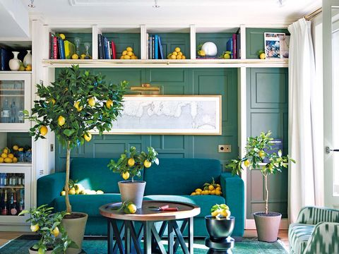 Flowerpot, Blue, Plant, Green, Interior design, Room, Shelving, Interior design, Table, Wall,