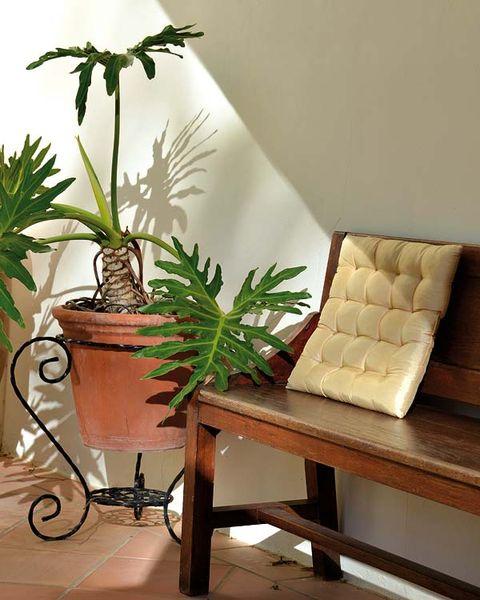 Flowerpot, Houseplant, Hardwood, Interior design, Plant stem, Throw pillow, Pillow, Armrest, Herb, Hemp family,