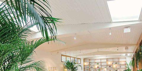 Plant, Interior design, Flowerpot, Floor, Furniture, Table, Ceiling, Interior design, Real estate, Flooring,