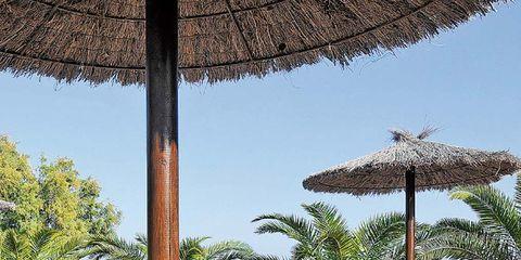 Furniture, Outdoor furniture, Table, Drinkware, Drink, Bottle, Shade, Resort, Outdoor table, Tropics,