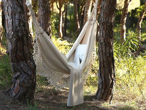 Nature, Hammock, Natural environment, Leaf, Tree, Forest, Woody plant, Sunlight, Nature reserve, Trunk,