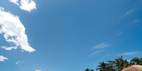 Tree, Sand, Woody plant, Azure, House, Tropics, Arecales, Beach, Caribbean, Shore,