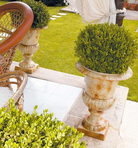 Shrub, Garden, Groundcover, Yard, Landscaping, Courtyard, Herb, Hedge, Cypress family,