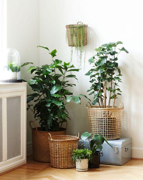 rincón con plantas en cestas
