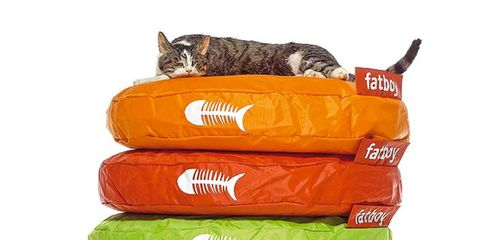 Carnivore, Orange, Small to medium-sized cats, Felidae, Cat, Colorfulness, Aqua, Synthetic rubber, Pet supply, Cat supply,
