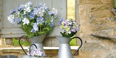Flowerpot, Plant, Flower, Purple, Lavender, Interior design, Petal, Flower Arranging, Cut flowers, Violet,