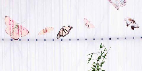 Room, Interior design, Floor, Table, Furniture, Invertebrate, Wall, Interior design, Insect, Flooring,