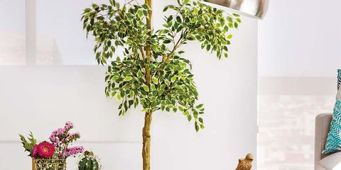 Furniture, Table, Interior design, Coffee table, Tree, Houseplant, Room, Wall, Branch, Plant,