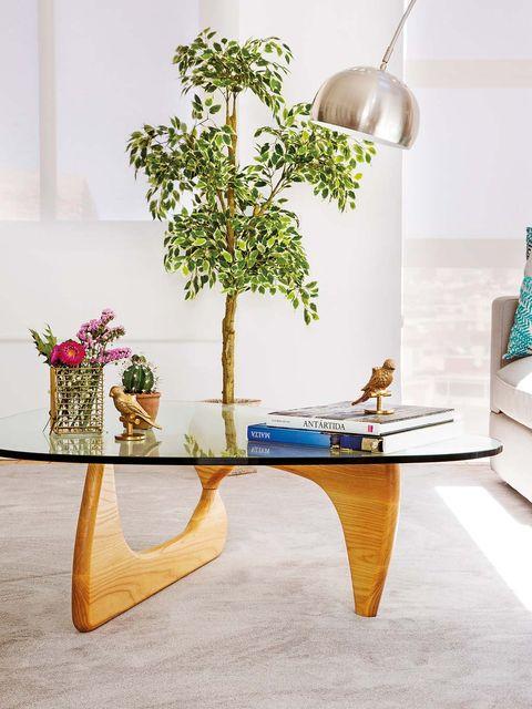 Flowerpot, Table, Furniture, Interior design, Coffee table, Room, Wall, Tree, Houseplant, Plant,