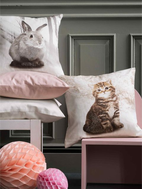 Vertebrate, Pink, Carnivore, Felidae, Small to medium-sized cats, Door, Cat, Grey, Peach, Home,