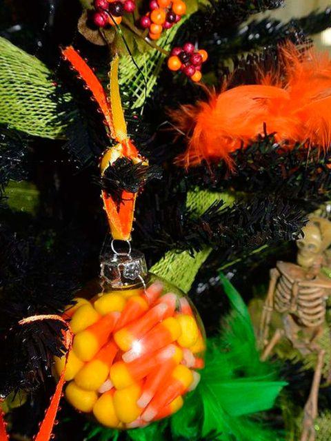 Plant, Flower, Fruit,