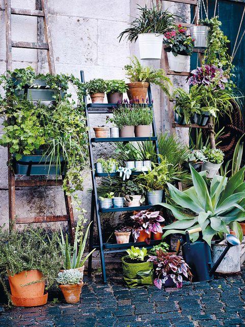 Flowerpot, Plant, Terrestrial plant, Houseplant, Interior design, Succulent plant, Perennial plant, Pebble, Xanthorrhoeaceae, Agave,