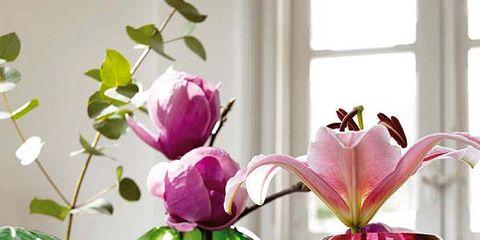 Petal, Glass, Purple, Flower, Pink, Magenta, Artifact, Violet, Interior design, Vase,